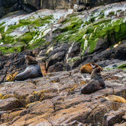 Seals on rocks<br/>Photo Credit: Simon Chin<br/>Canon 6D f/4 200mm 1/800s ISO100