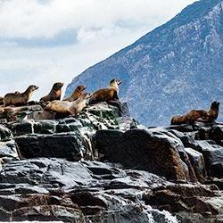 Bruny Island seals on rocks - guest contribution by Shona Van Lieshout